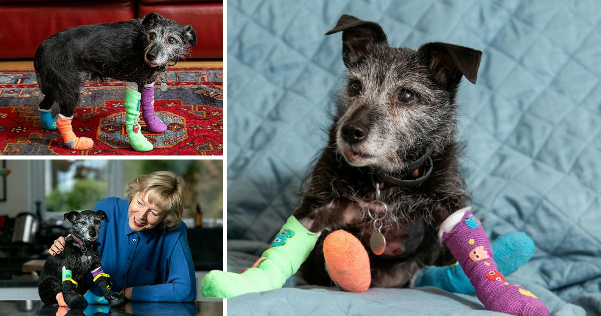 Jenny the dog survives being dragged 300m along a road when her lead got attached to a car