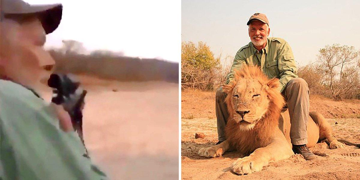 Coward trophy hunter celebrates shooting dead sleeping lion