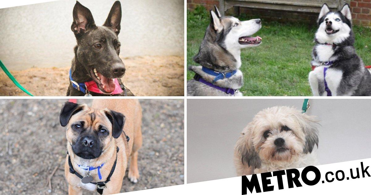 National Puppy Day: Here are nine beautiful dogs who need a home