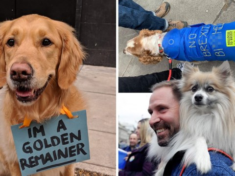 Brexit march taken over by pack of adorable protesters