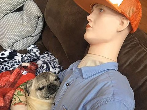 We can't stop looking at this senior dog with separation anxiety who cuddles a mannequin when his owner is away