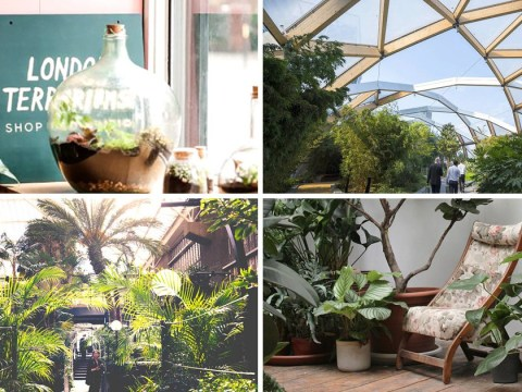 Where can you go to get an indoor nature fix in the city?