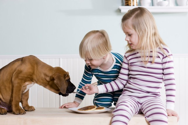 kids feeding a dog food from the dinner table