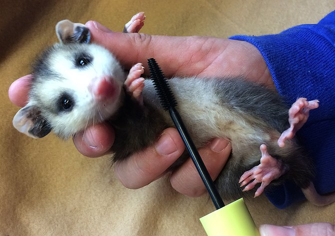 Animal shelters are reusing mascara wands to soothe cute creatures
