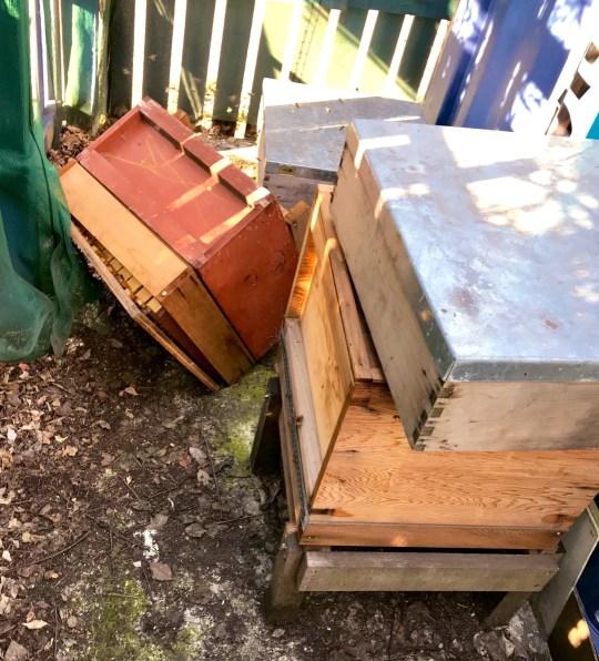 Bee burglar Credit: Bermondsey Street Bees