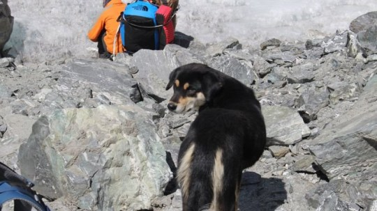 Stray dog scales 24,000 Himalayan mountain Provider: Don Wargowsky Source: https://www.bbc.co.uk/newsround/47484009