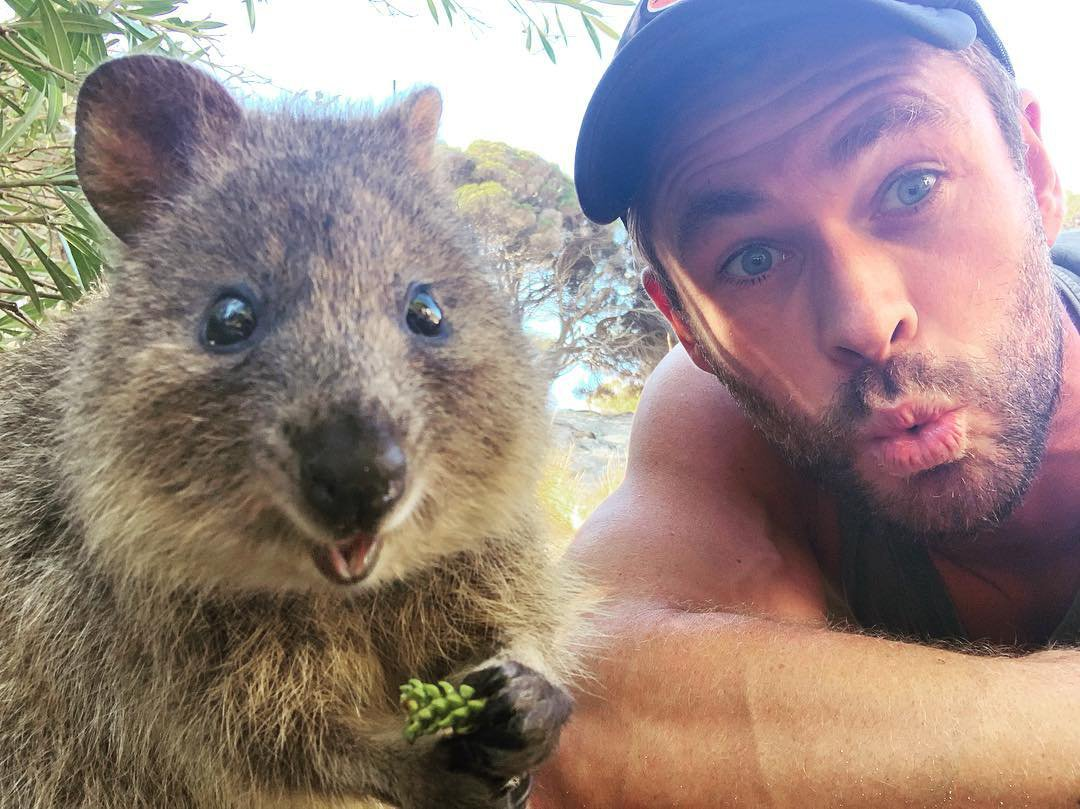 Chris Hemsworth taking selfies with a quokka is almost too cute to handle