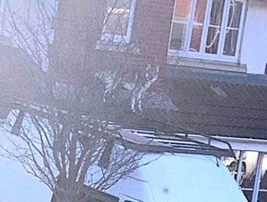 Dated: 21/03/2019 Scott Gretton, 31, from Hartlepool, got the shock of his life when a neighbour rang to tell him that his dog was standing on the roof of his house. Pictured: Gary, Scott's 15-month-old dog, on the roof of the house. See story North News