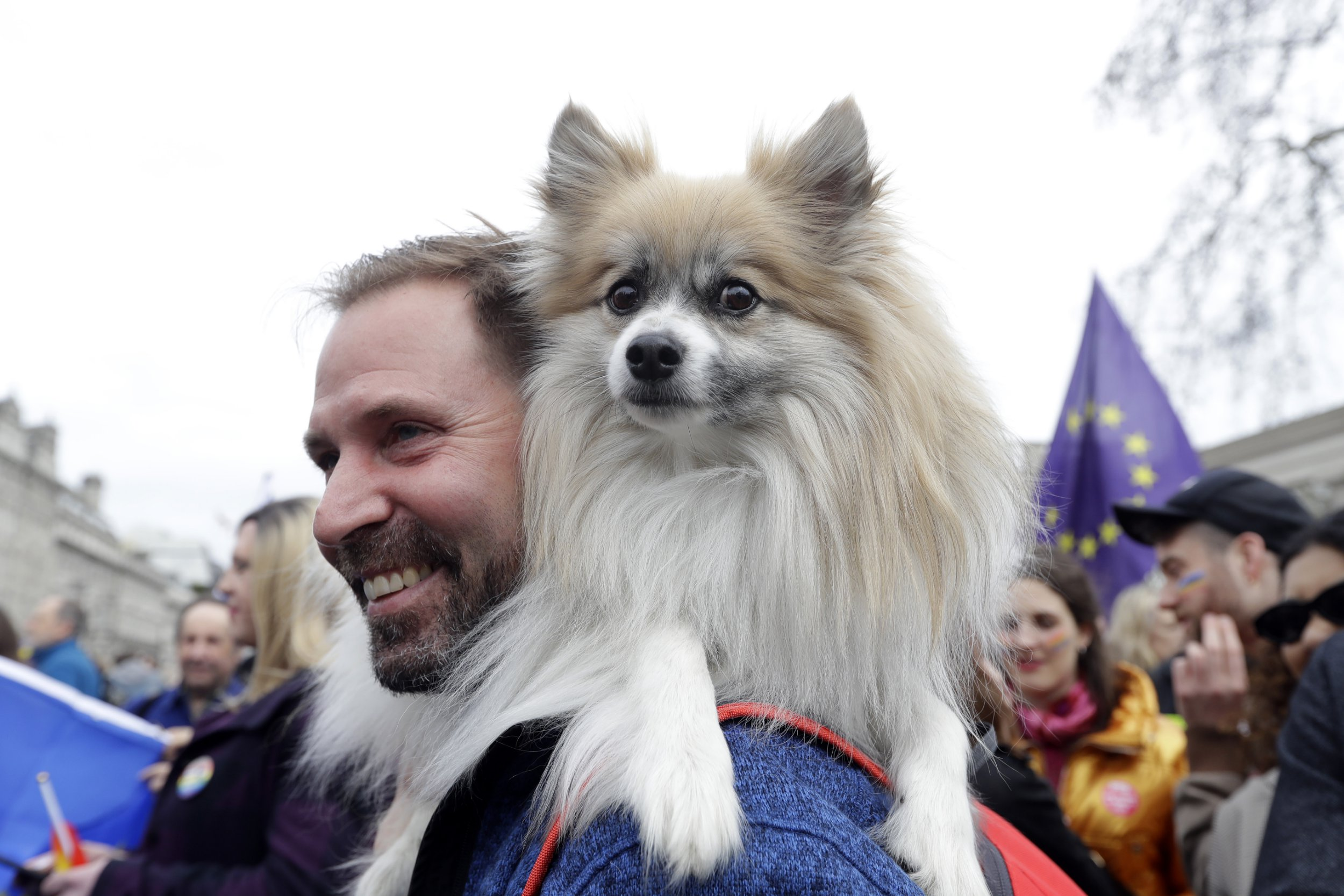 A demonstrator carries a dog on his shoulders during a Peoples Vote anti-Brexit march in London, Saturday, March 23, 2019. The march, organized by the People's Vote campaign is calling for a final vote on any proposed Brexit deal. This week the EU has granted Britain's Prime Minister Theresa May a delay to the Brexit process. (AP Photo/Kirsty Wigglesworth)