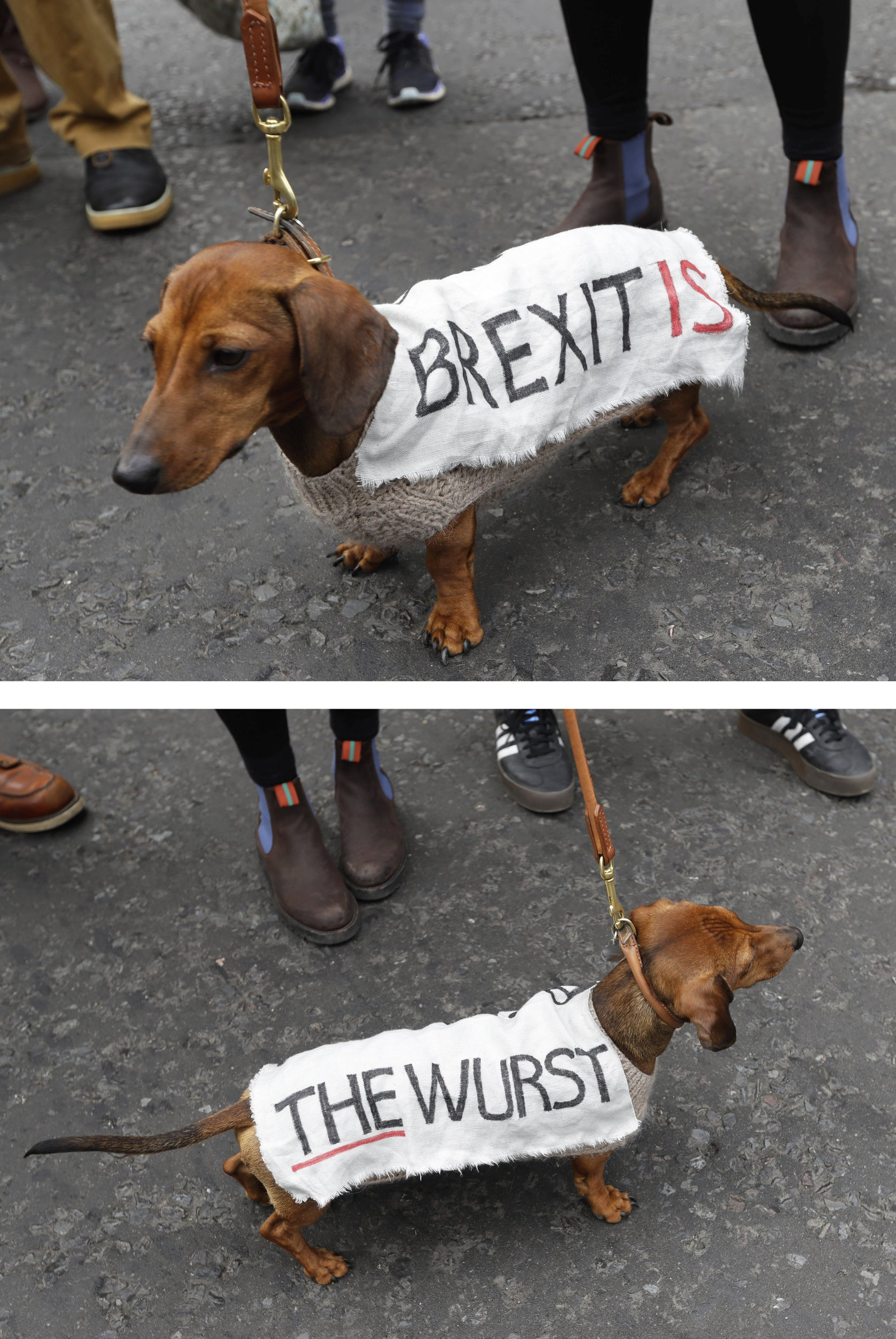 """In this two pictures combo, a dog wears a banner on its coat with the words """"Brexit is the wurst"""" during a Peoples Vote anti-Brexit march in London, Saturday, March 23, 2019. The march, organized by the People's Vote campaign is calling for a final vote on any proposed Brexit deal. This week the EU has granted Britain's Prime Minister Theresa May a delay to the Brexit process. (AP Photo/Kirsty Wigglesworth)"""