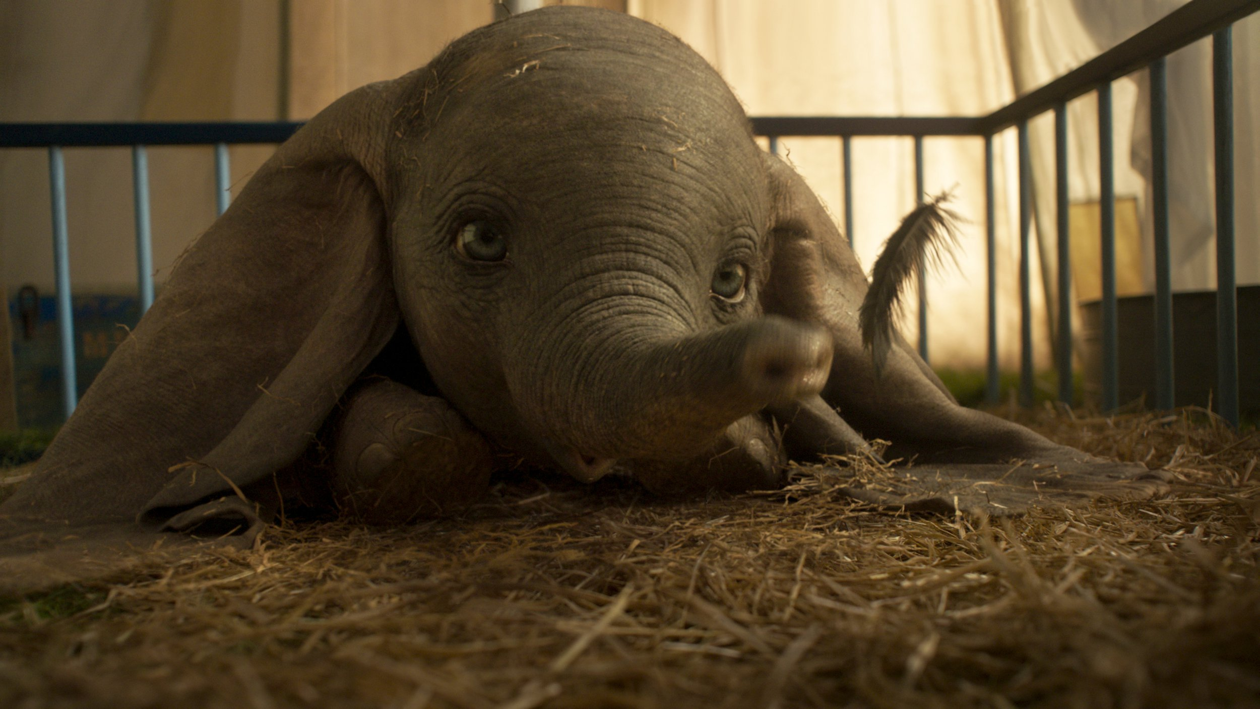 dumbo as seen in the 2019 version