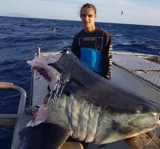 Giant shark eaten by something even bigger Jason, AKA Trapman Bermagui, pulled up this severed shark's head on a fishing trip Provider: Facebook Source: https://www.facebook.com/trapmanbermagui/