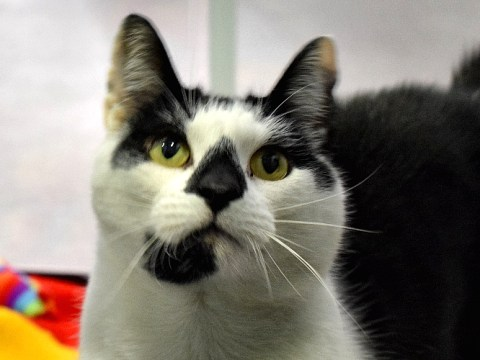 Battersea's loneliest cat just wants a new home for his birthday