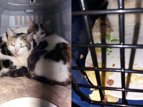 Mother cat and kitten rescued after being dumped on a doorstep with a plate of crisps