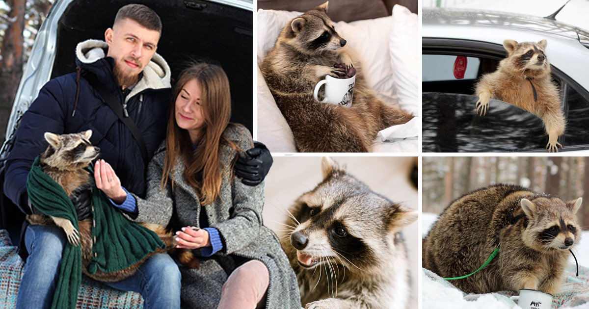 Woman says her pet raccoon is her 'child' despite destroying her house