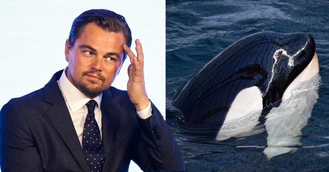 Leo DiCaprio's petition works