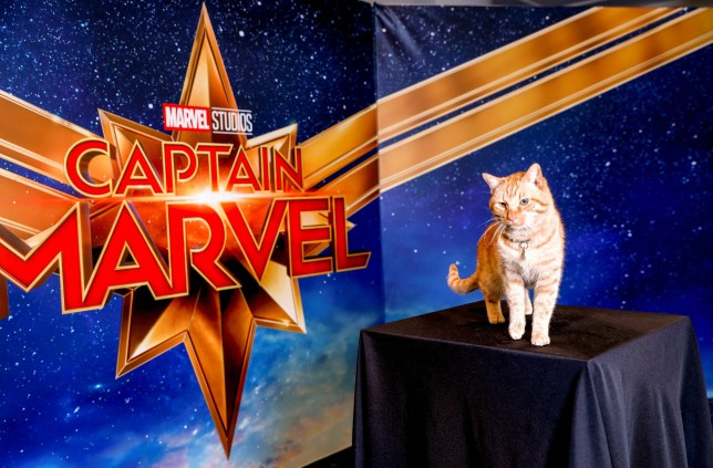 Reggie AKA Goose the Cat poses for a portrait for Captain Marvel in Beverly Hills, California , U.S. February 22, 2019. REUTERS/Kyle Grillot