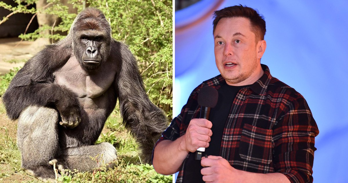 Elon Musk drops bizarre rap track dedicated to Harambe the gorilla