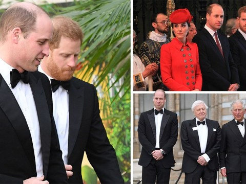 William and Harry have had 'serious falling out' says body language expert