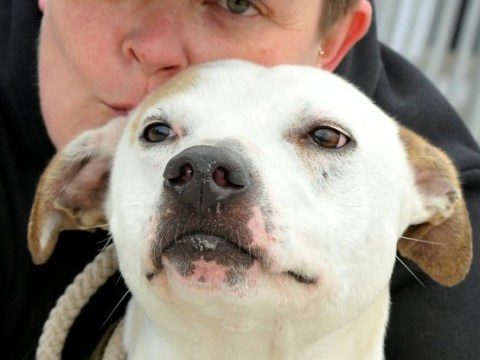 Shelter desperately seeking volunteers to rescue dogs from death row