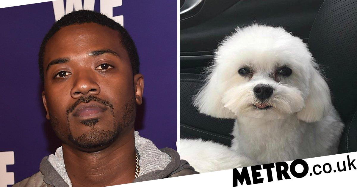 Ray J's offers $20,000 reward for stolen dog Boogotti