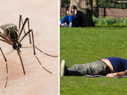 Malaria and other tropical diseases could hit UK because of climate change