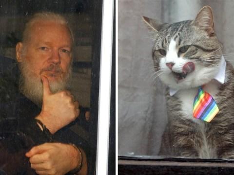 WikiLeaks confirms Julian Assange's cat is safe following his arrest