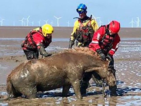 Horses and riders saved from mud after four-hour rescue mission
