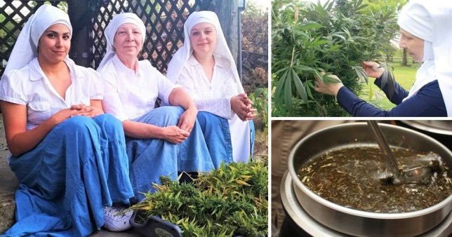 A documentary about nuns who grow marijuana will be released to mark the weed users' holiday