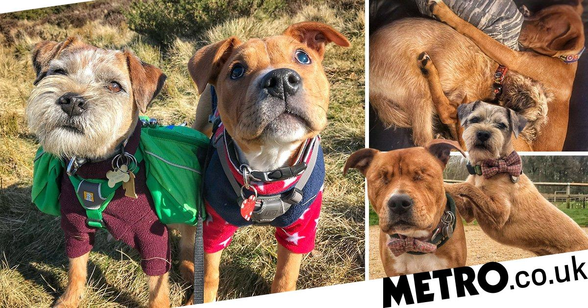Adorable blind dog has an unofficial guide dog and they're best friends