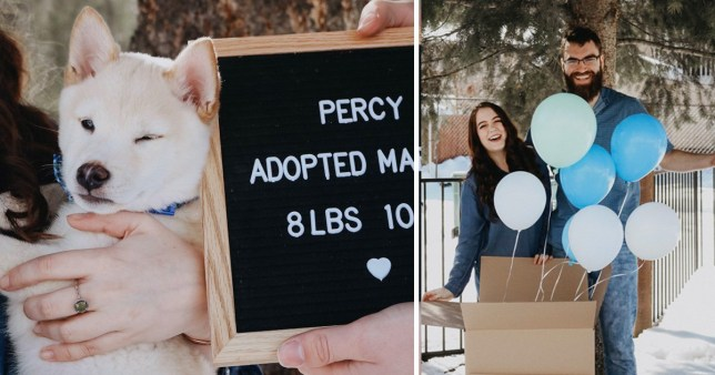 Lily and Paul teased their family with a puppy gender reveal