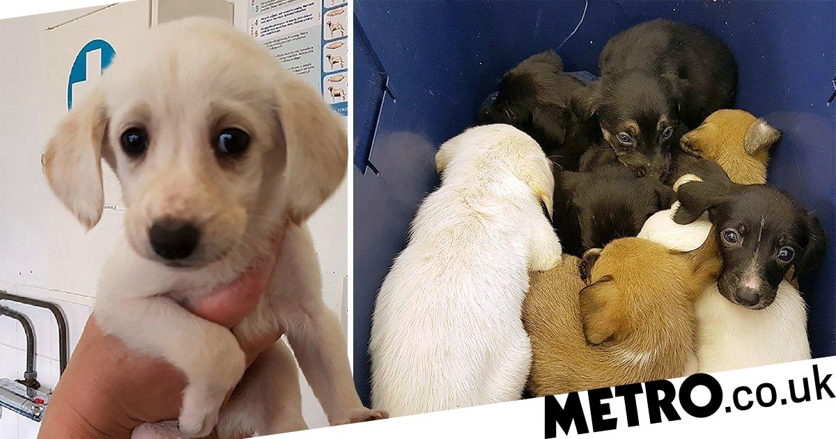 Puppies abandoned in plastic box given names after Marvel superheroes
