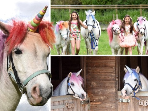 'Real-life unicorn experience' accused of demeaning horses