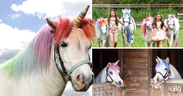 Real-life unicorn experience' accused of demeaning horses | Metro News