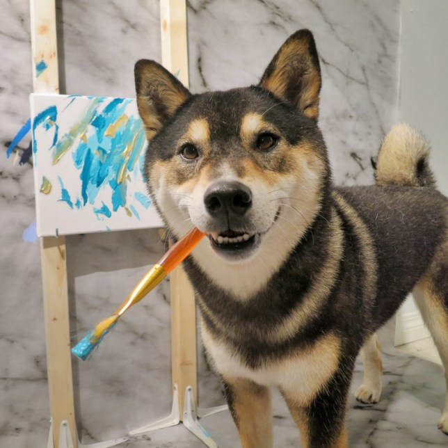 PIC FROM SHIBA INU ART / CATERS - (Pictured: Hunter the painting Shiba Inu) - This loveable pup is a real-life PAWCASSO, as he has amassed thousands of dollars from painting a series of abstract masterpieces. Hunter, a cute Shiba Inu, creates amazing works at his home in Alberta, Canada, having been taught by his owners, Kenny Au and his wife, Denise Lo. The works created by 5-year-old Hunter would look right at home in a modern art gallery, and to date the pooch has sold more than 150 paintings. These are sold on Hunters Etsy store and have made Hunter more than 000USD (3,800GBP) in the process. - SEE CATERS COPY