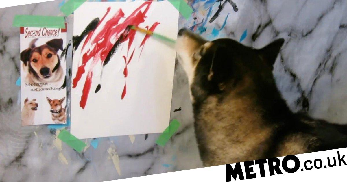 Hunter the Shiba is a professional painter who makes thousands from his masterpieces