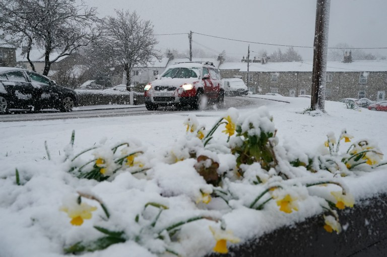 Daffodils covered in a blanket of snow in the village of Catton, Northumberland, after temperatures dipped below freezing overnight. PRESS ASSOCIATION Photo. Picture date: Wednesday April 3, 2019. Hill snow, sleet, showers and gales are expected for parts of the UK as the chilly snap keeps hold. See PA story WEATHER Cold. Photo credit should read: Owen Humphreys/PA Wire