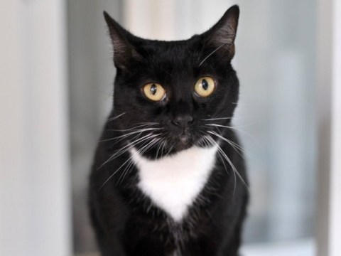 Lonely cat Lady has been waiting 430 days for someone to adopt her
