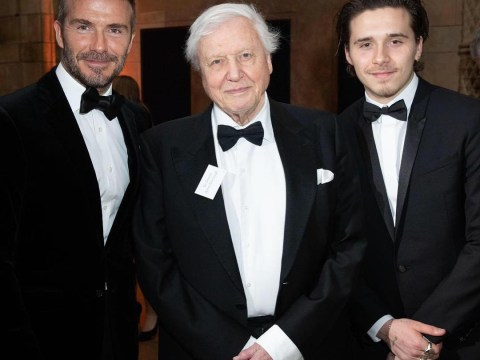 Brooklyn Beckham works for Sir David Attenborough on Netflix's Our Planet now, basically