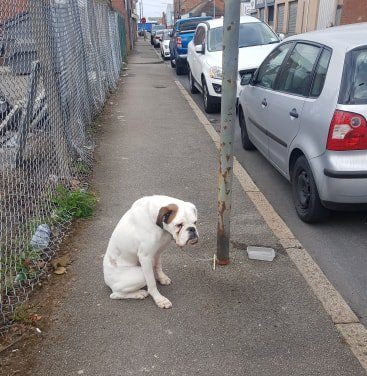 "Hull has spoken out in outrage after a ""beautiful"" dog was found abandoned and tied to a lamppost in the city. The white boxer was found by Graham Dobson, 43, on Thursday morning. He took him in and gave the pooch water and food before calling for the dog warden when the owner failed to return. The dog was left tied to a lamppost at the side of the road"
