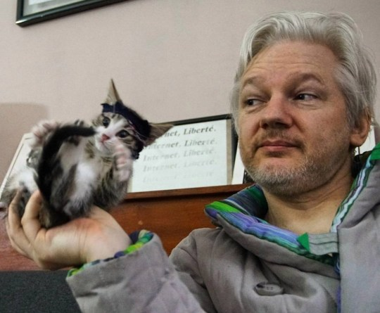 Tweets and Instagram posts from Julian Assange's cat, which lived with him in the Ecuadorian Embassy until his arrest.