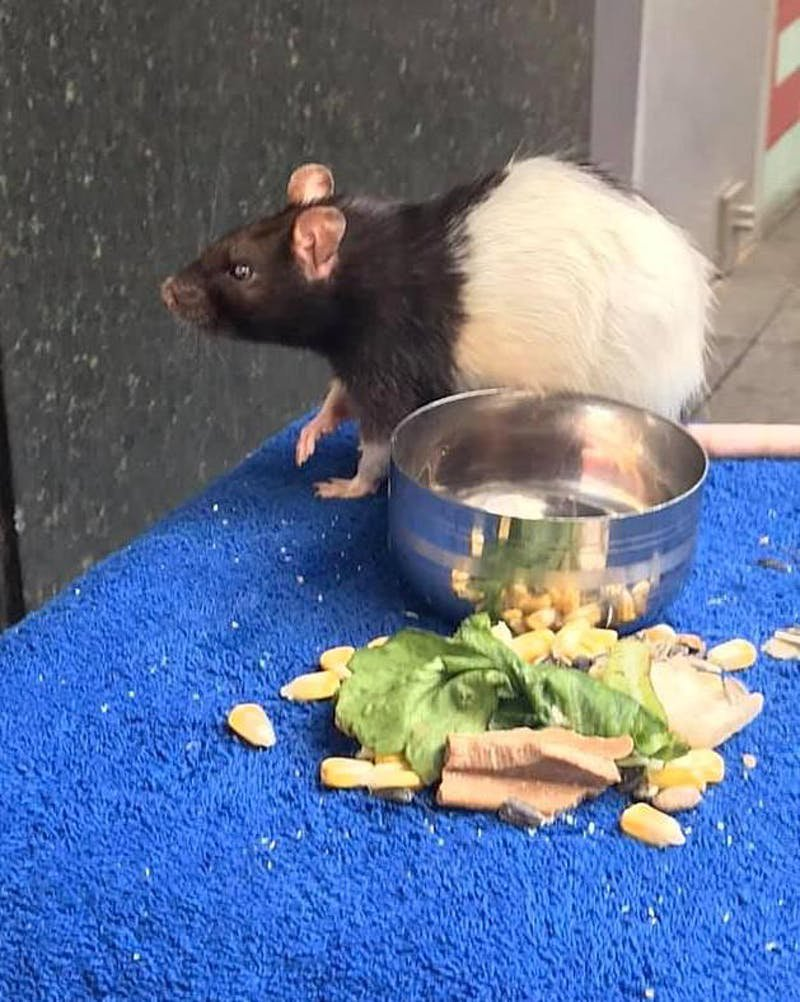 METRO GRAB - Homeless Man Asks People For Help After His Beloved Pet Rat Gets Stolen https://diply.com/31807/homeless-mans-beloved-pet-rat-was-stolen-and-people-are-rallying