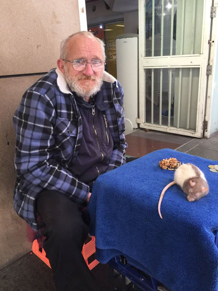 METRO GRAB - Homeless Man Asks People For Help After His Beloved Pet Rat Gets Stolen From https://www.boredpanda.com/homeless-man-chris-pet-rat-stolen-sydney/