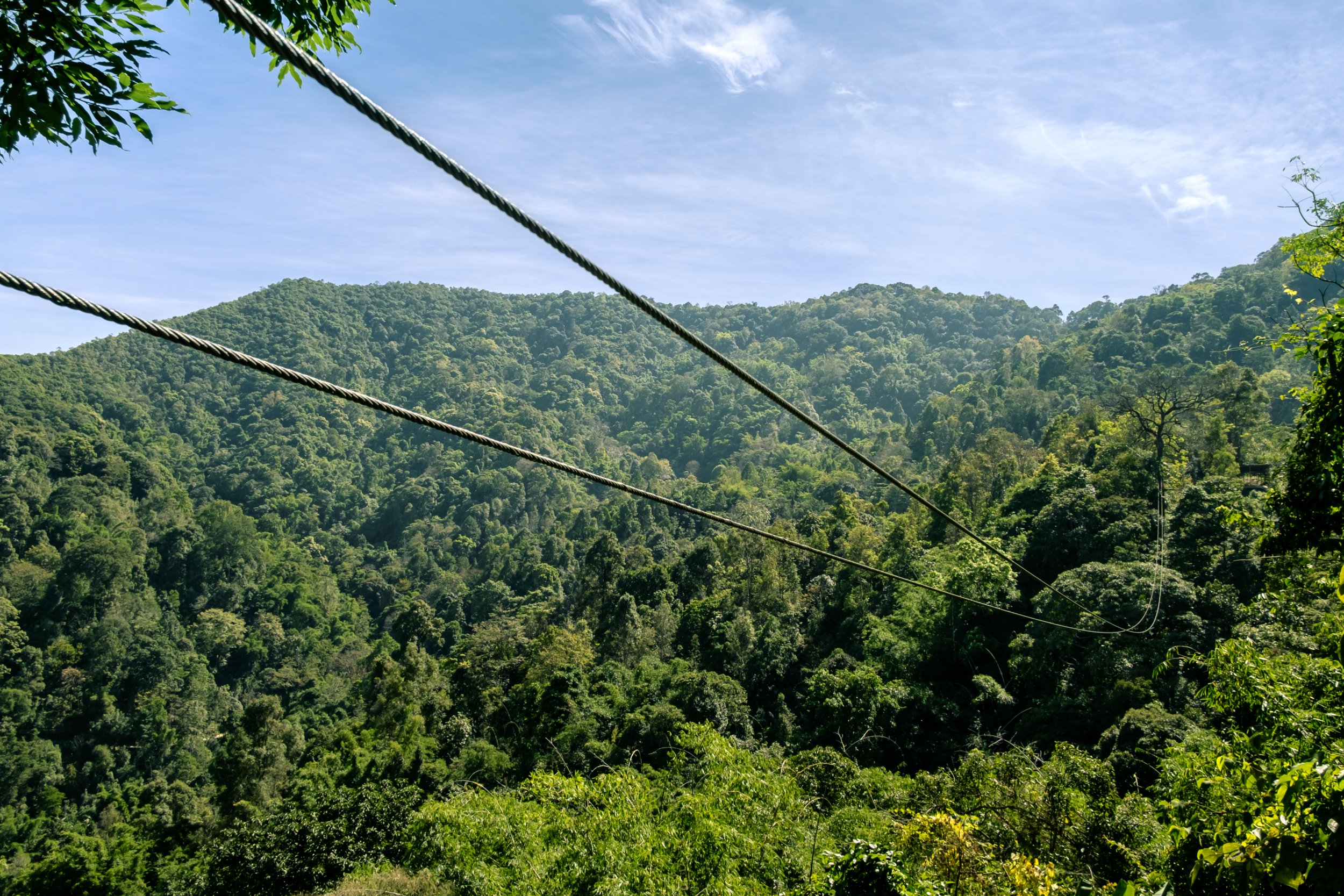 Tourist dies after zipline snaps on 'Flight of the Gibbon' through jungle