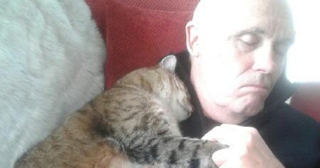 Cat and old man fall asleep together holding hands