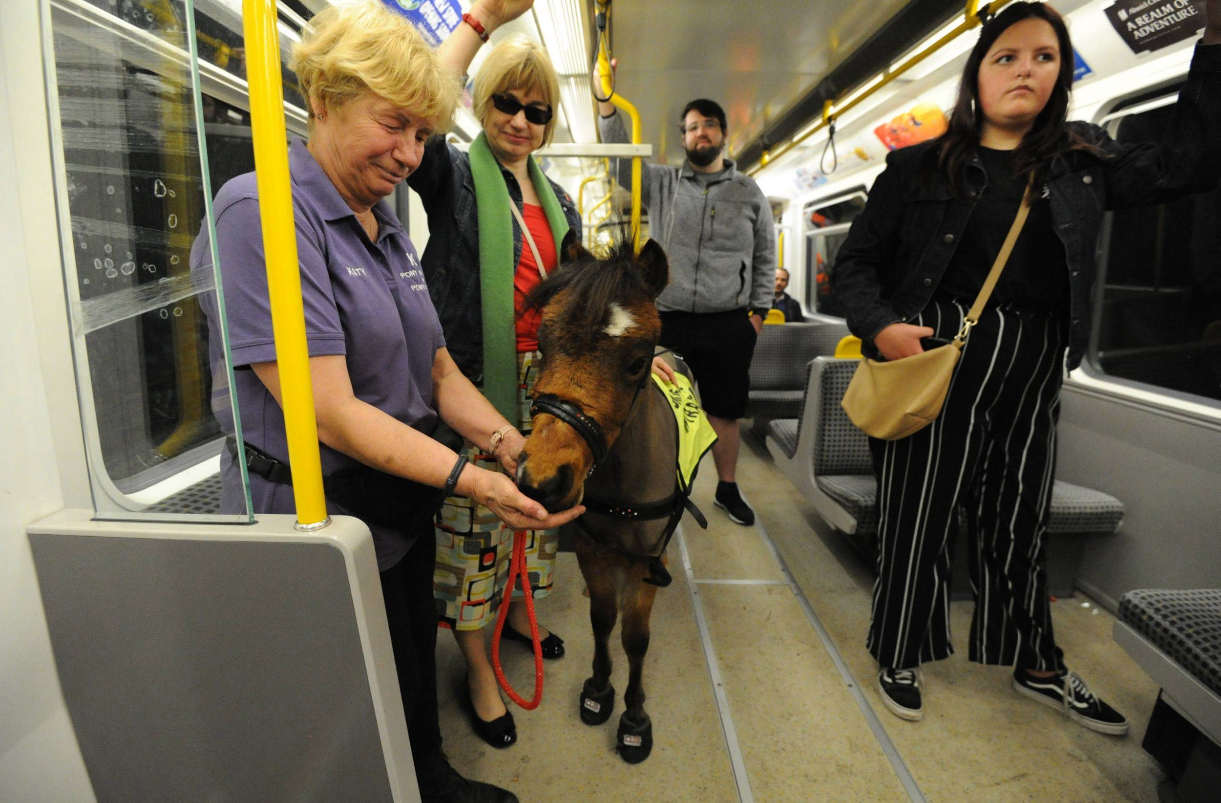 Dated: 18/04/2019 FOAL STEAM AHEAD ... Digby, the UK's first guide horse, who joined commuters on Newcastle city centre's Metro system while undergoing training in preparation for life in London, where he will lend a helping hand to Helena Hird, who regularly travels on the Underground. Pictured with Katy Smith, owner of KL Pony Therapy, based in Northallerton, North Yorkshire. See story and video by North News
