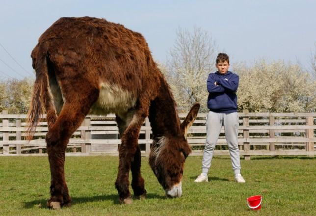 Tyler Allen-Day, 12, with giant donkey, Derrick