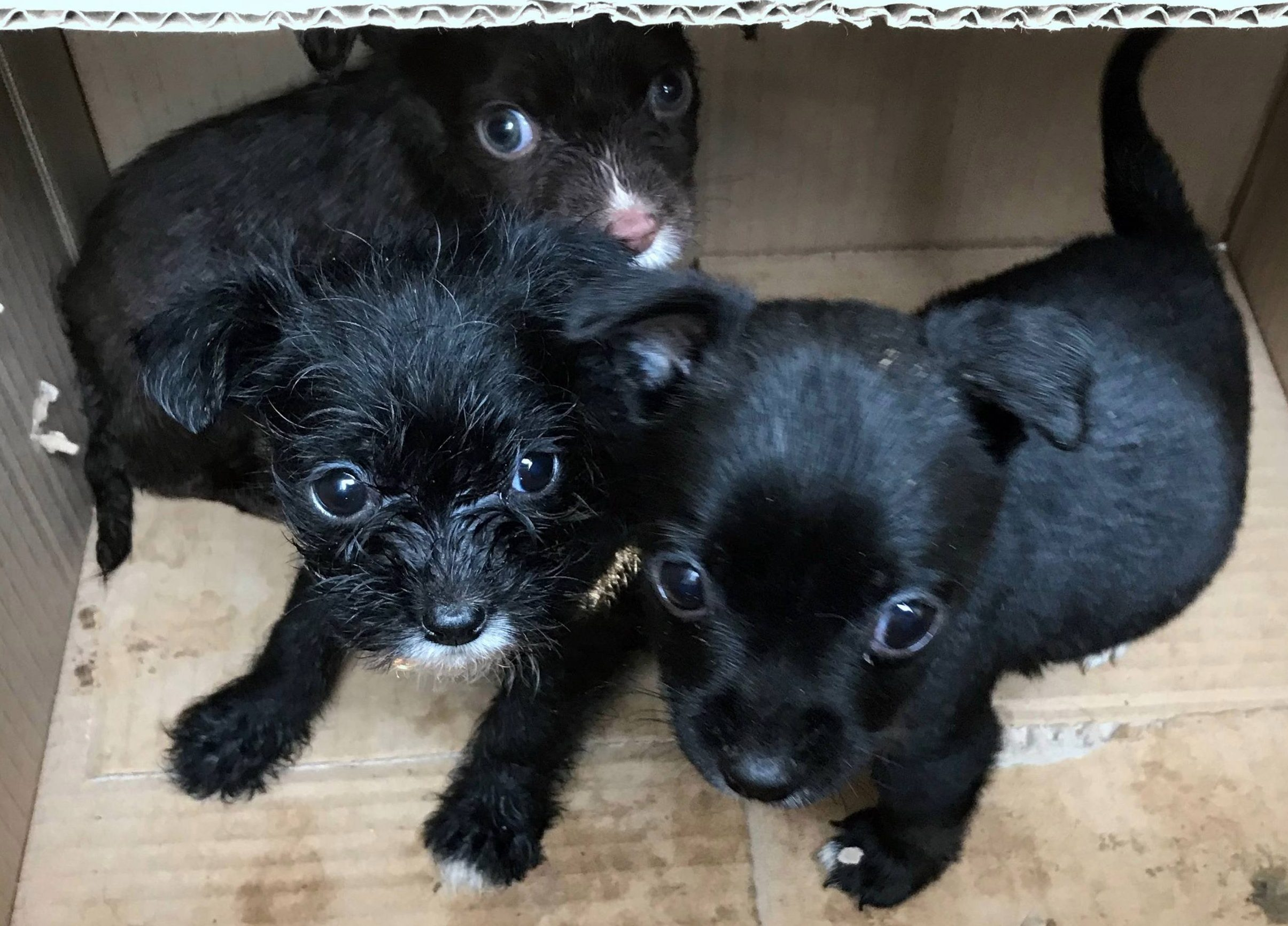 Hunt for owner who left three puppies for dead in 'filthy' cardboard box