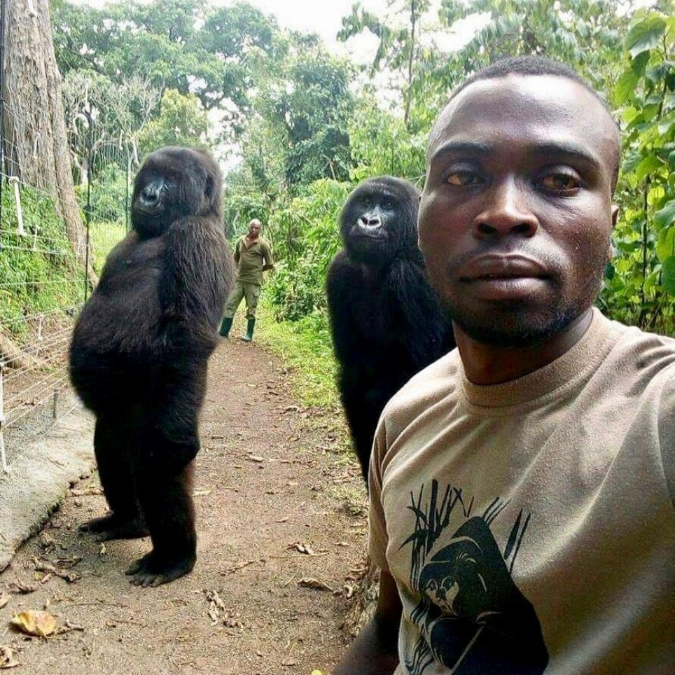 Mathieu Shamavu, Virunga Ranger and caretaker at Senkwekwe Center for Orphaned Mountain Gorillas poses for a selfie with two gorillas at Virunga National Park, Democratic Republic of the Congo April 18, 2019 in this picture obtained from social media April 25, 2019. Mathieu Shamavu for www.virunga.org via REUTERS ATTENTION EDITORS - THIS IMAGE HAS BEEN SUPPLIED BY A THIRD PARTY. MANDATORY CREDIT.