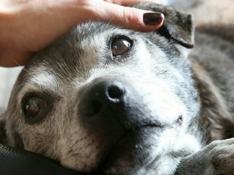 Couple who adopted abandoned elderly dog seeking donations for her cancer treatment